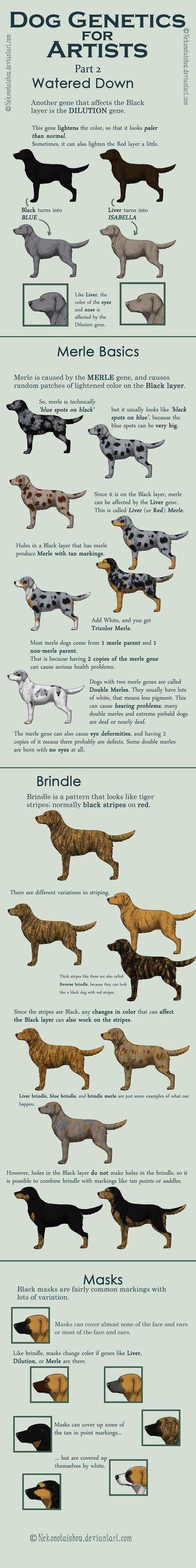 Pin By Maddison Park On Art Dog Anatomy Dog Infographic Dog Drawing