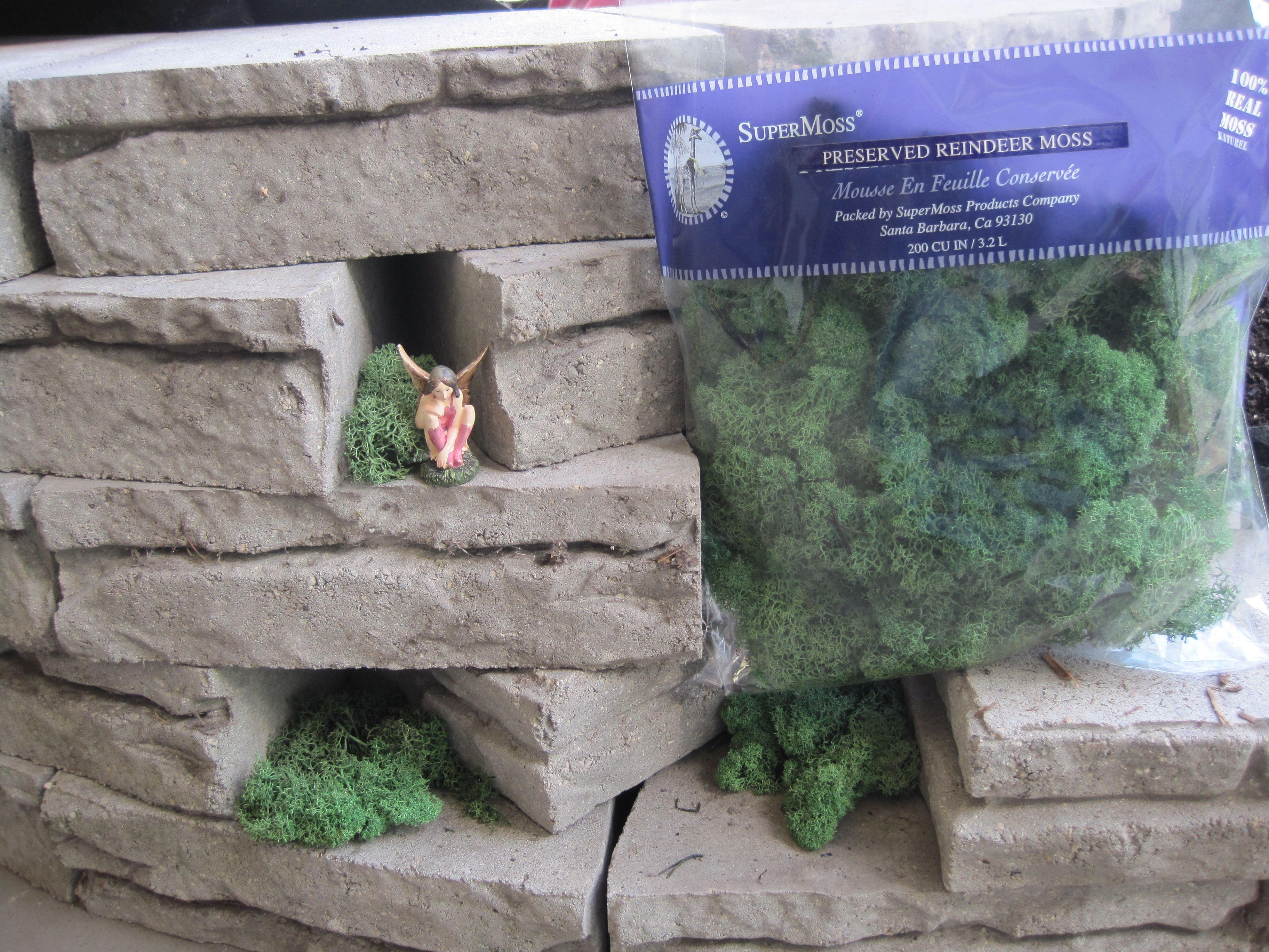 Building A Fairy Garden 017
