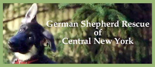 German Shepherd Rescue Of Central New York Just South Of Syracuse