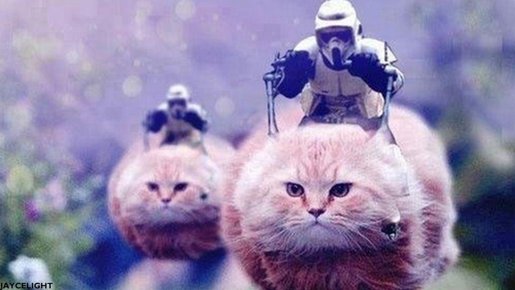 Star Wars Cats Star Wars Humor Star Wars Memes Funny Animals