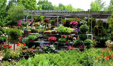 17 Best 1000 images about Plant nursery on Pinterest Little giants