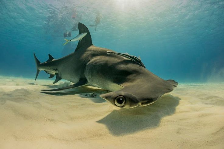 Underwater mother nature moments