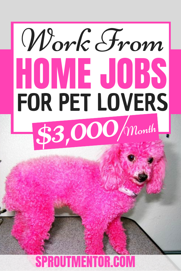 5 Perfect Jobs for Pet Lovers that Pays 50/Hour Working