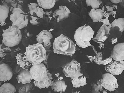 Tumblr Backgrounds Black And White Roses Google Search