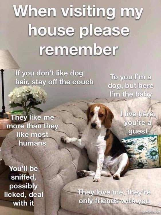 Pin By Coulton Thomas On Doggos Dogs Beagle Puppy Dog Quotes