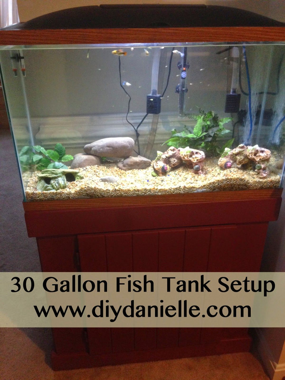 30 Gallon Fish Tank Setup