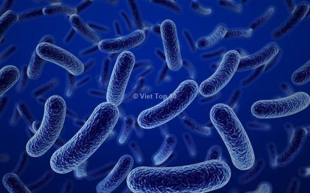vi khuẩn đáng sợ nhất trú ngụ trên bàn tay con người - việt top 10 - viettop10 - viettop10.net