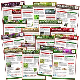 Download A Variety Of Printable Fact Sheets Free All Focused On