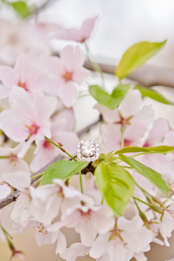 Gorgeous ring, gorgeous cherry blossoms for this DC engagement session | Photo by Terri Baskin Photography