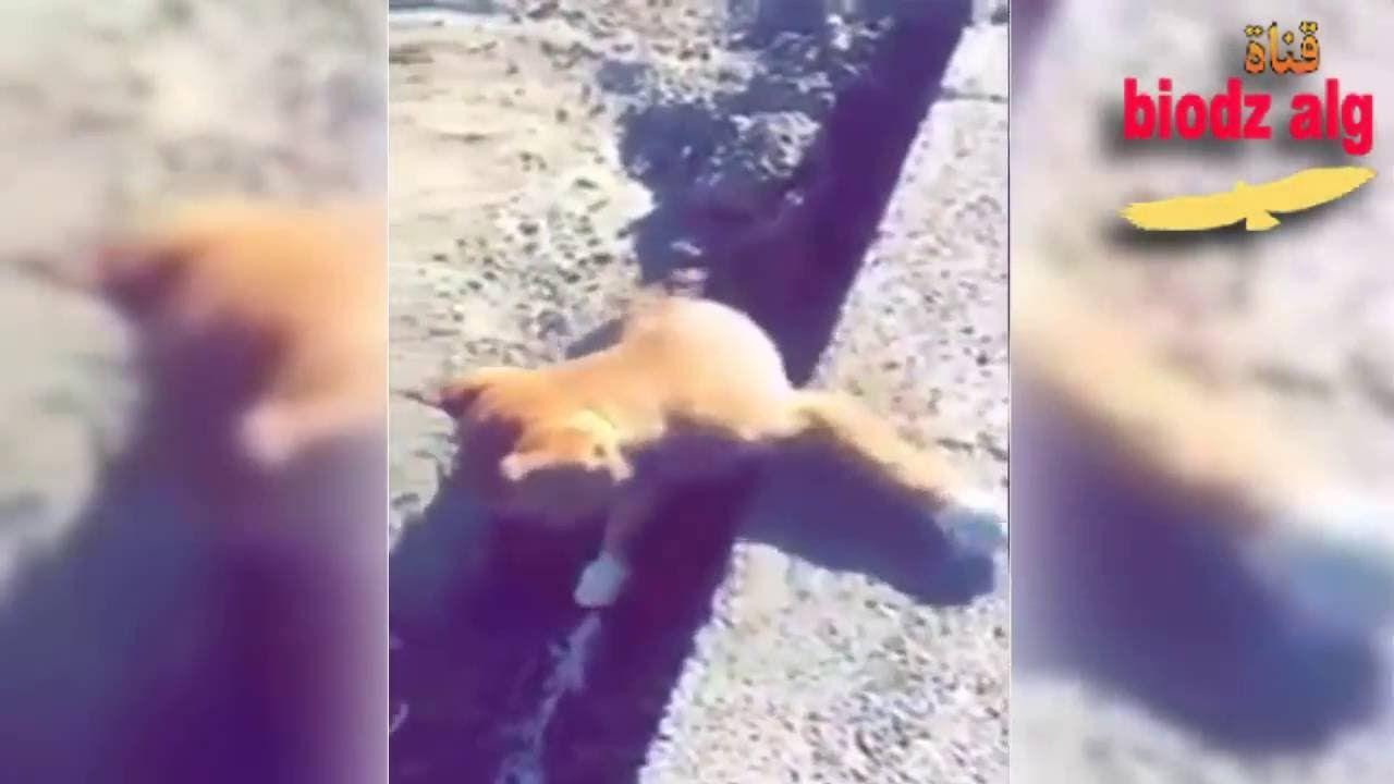 في جو تملؤه الرحمة و الرفق بالحيوان سعودي ينقذ كلب و العجيب ما حدث بعد Youtube Enjoyment Music