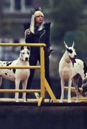 lady gaga lady gaga lady gaga gif animal lover
