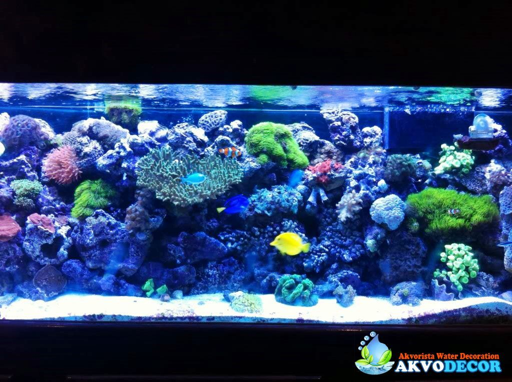 Aksesoris Akuarium Air Laut Aquarium Air Laut Pinterest Dan And Aquariums
