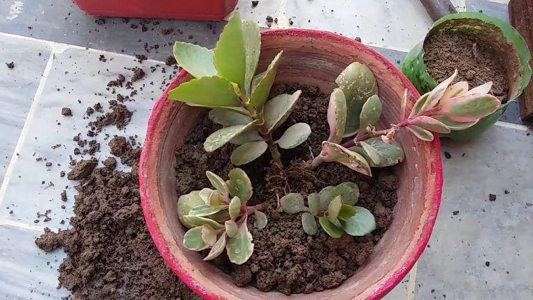 В процессе пересадки | Растения, Цветок и Уход