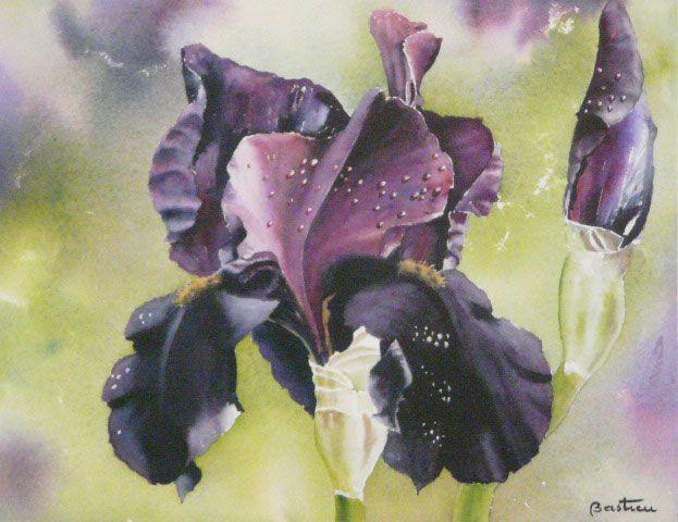 Aquarelle Iris Black Hills Gerard Bastien