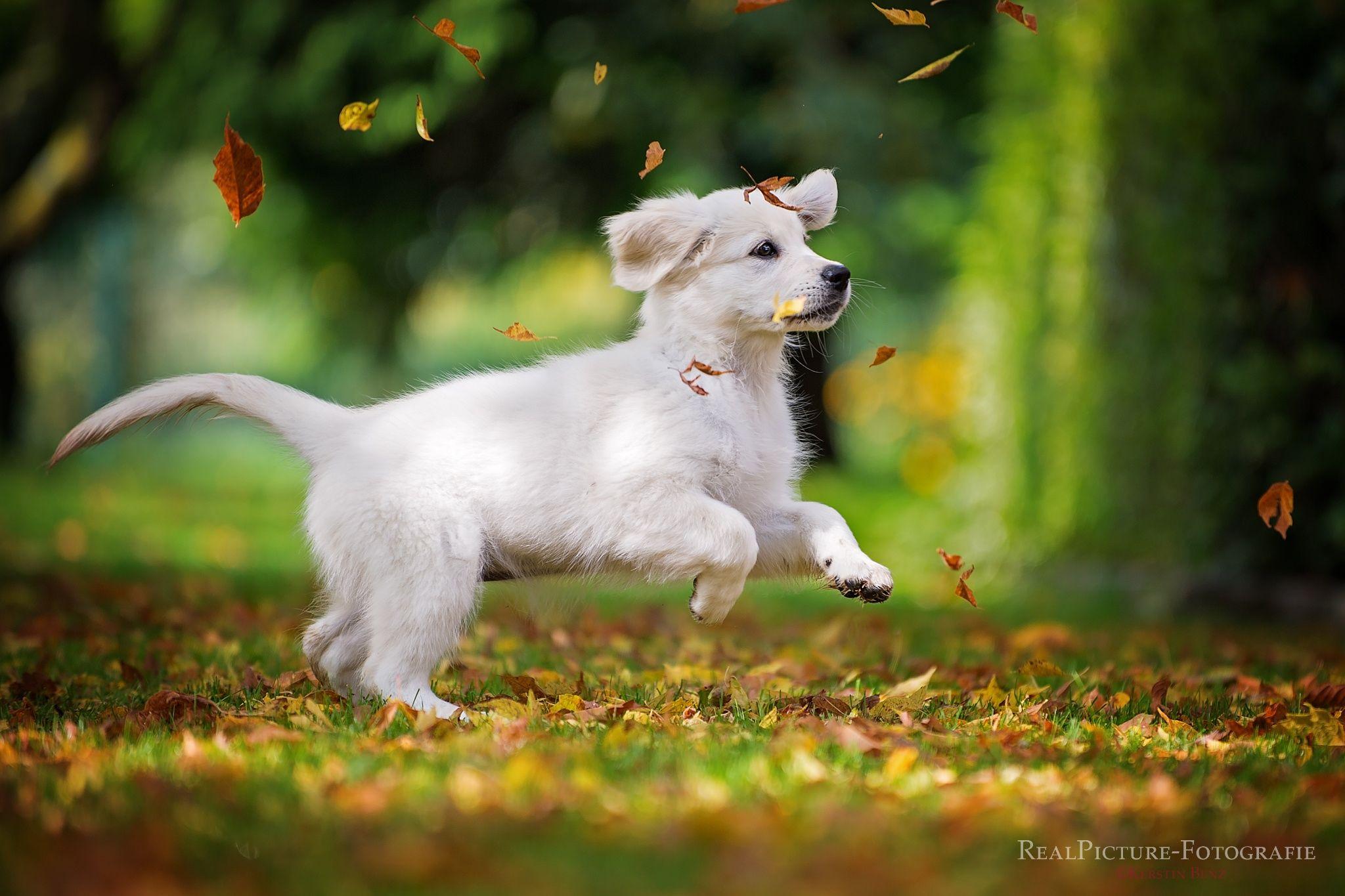 Photograph Hurra, Hurra der Herbst ist da... by Kerstin Benz  on 500px