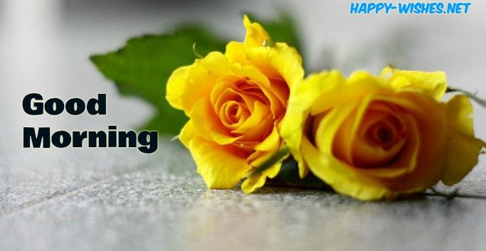 50 Good Morning Wishes With Rose Picture Yellow Roses Beautiful Flowers Wallpapers Yellow Rose Flower