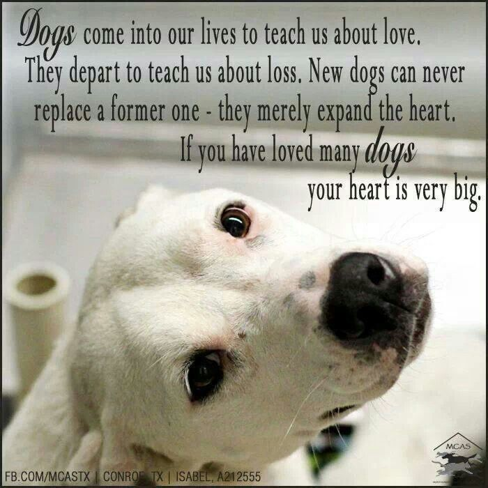 Dogs Come Into Our Lives To Teach Us About Love They Depart To