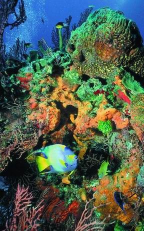 #Sorkeling #Arrecifes #Coral   En la República Dominicana, los arrecifes de coral se utilizan en la extracción de sustancias para la industria farmacológica y sirven como barreras protectoras contra la erosión de playas, hábitat para innumerables especies amenazadas y deleite para los amantes de la naturaleza.