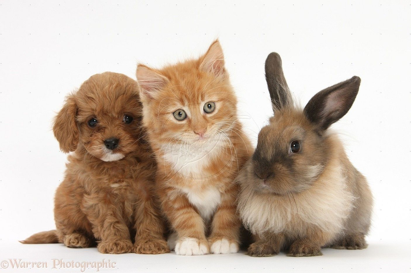 Cute puppies and kittens and bunnies