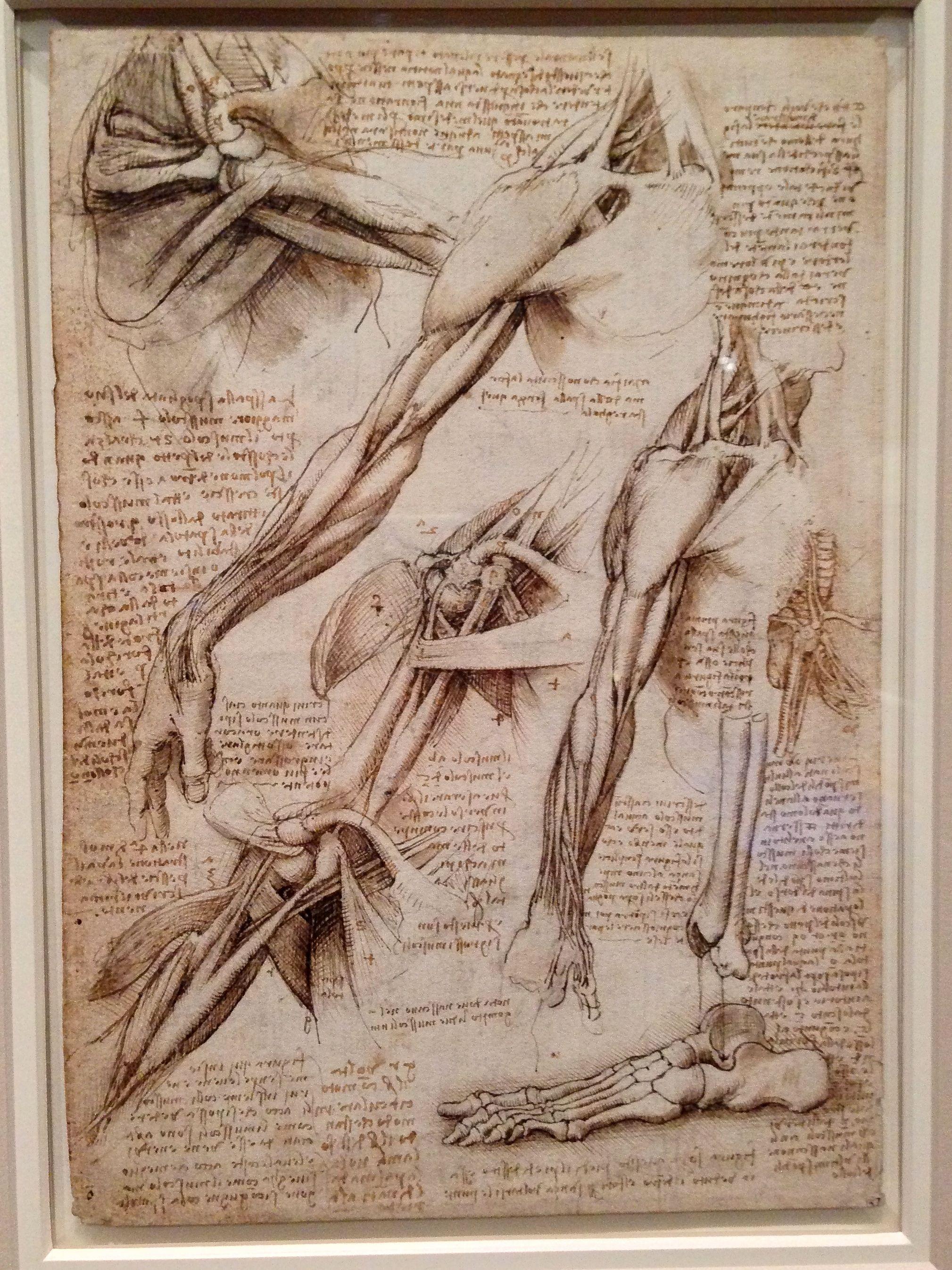 Da Vinci Art Pinterest Drawings