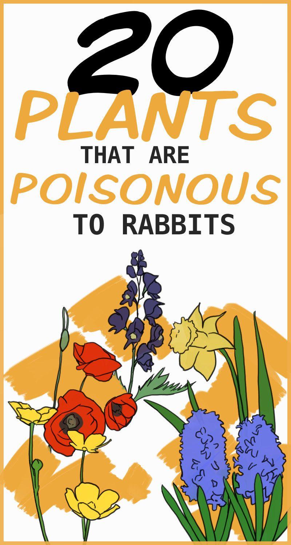 wild rabbit food diet