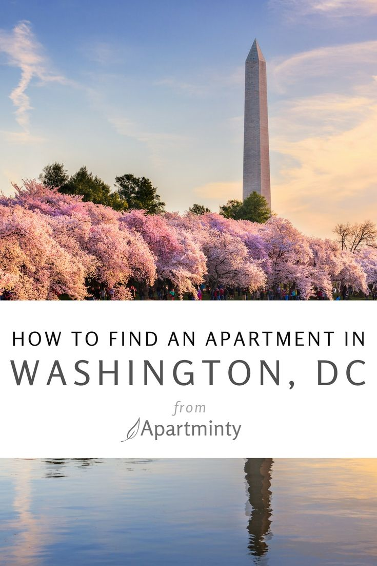 How To Find An Apartment In Washington DC | Everything You Need To Know  About Apartment