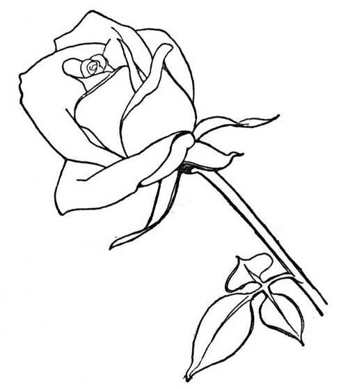 Resultado de imagem para imagem de uma flor para pintar