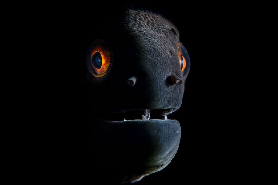 Winners Of The 2019 Underwater Photographer Of The Year Contest ... Winners Of The 2019 Underwater Photographer Of The Year Contest ... Photography Subjects underwater photography subjects