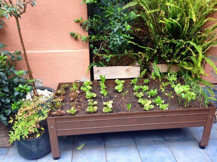 Balkon Hochbeet Selber Bauen hochbeet balkon bauen bepflanzen metall container flexibel salate