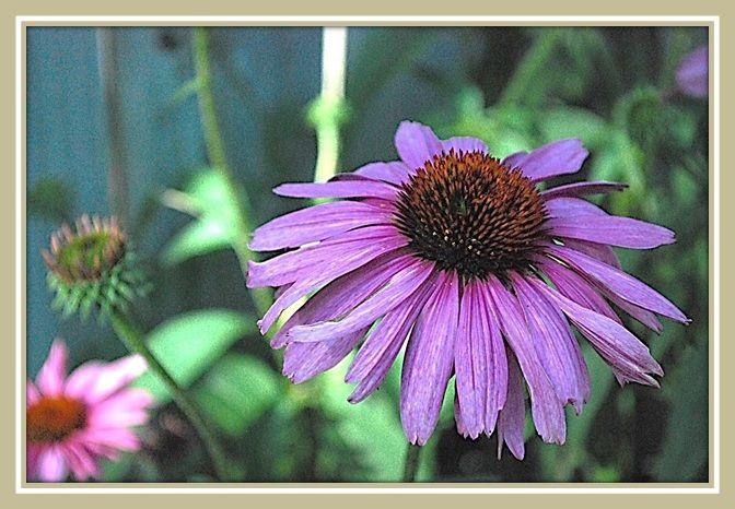 6 More Hardy Perennials to Make Your Garden Sing
