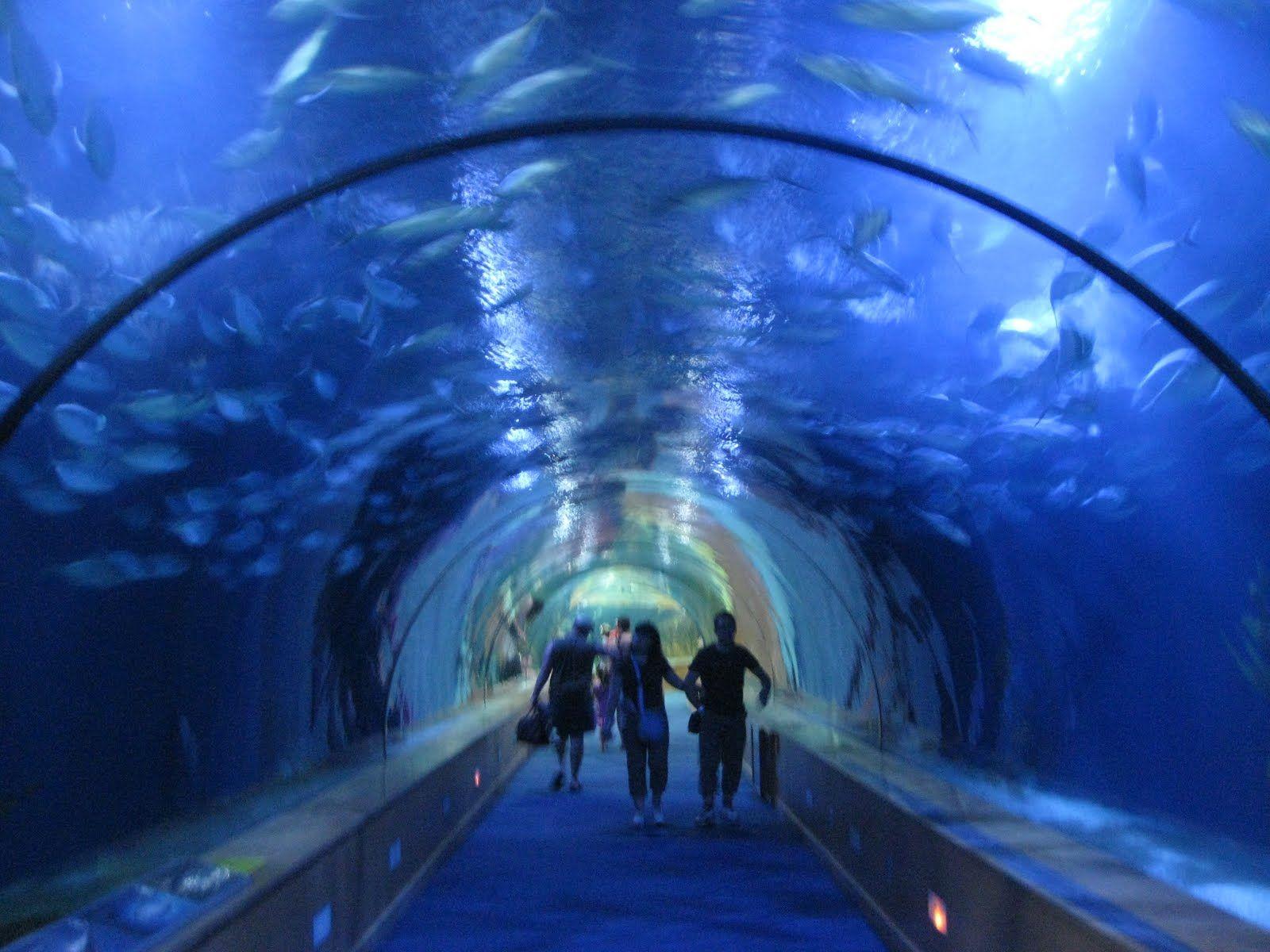 Ultra Cool Fish Tank by Jonathan Paulson from