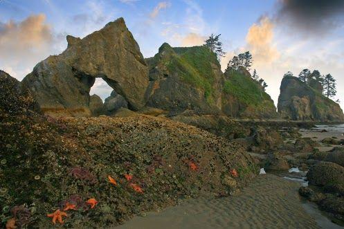 Le Point d'Arches sur la plage de Shi Shi dans Le parc national Olympique situé aux environs de la ville de Seattle dans l'État de Washington au Nord-Ouest des États-Unis.