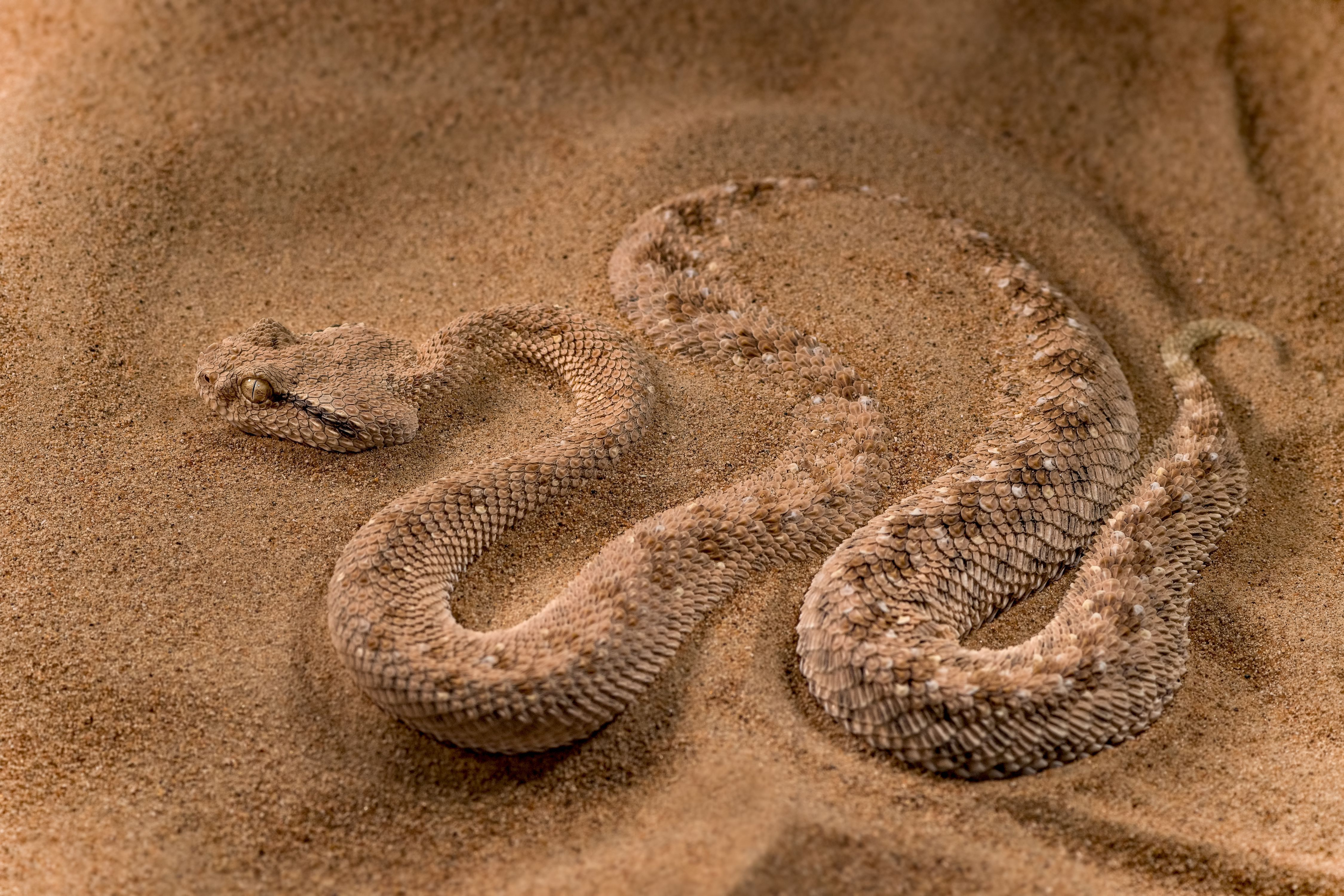 Photo of the Day National geographic, Desert animals