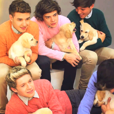 boys and labrador puppies