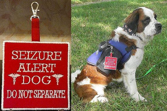 Epilepsy Alert Dogs Uk
