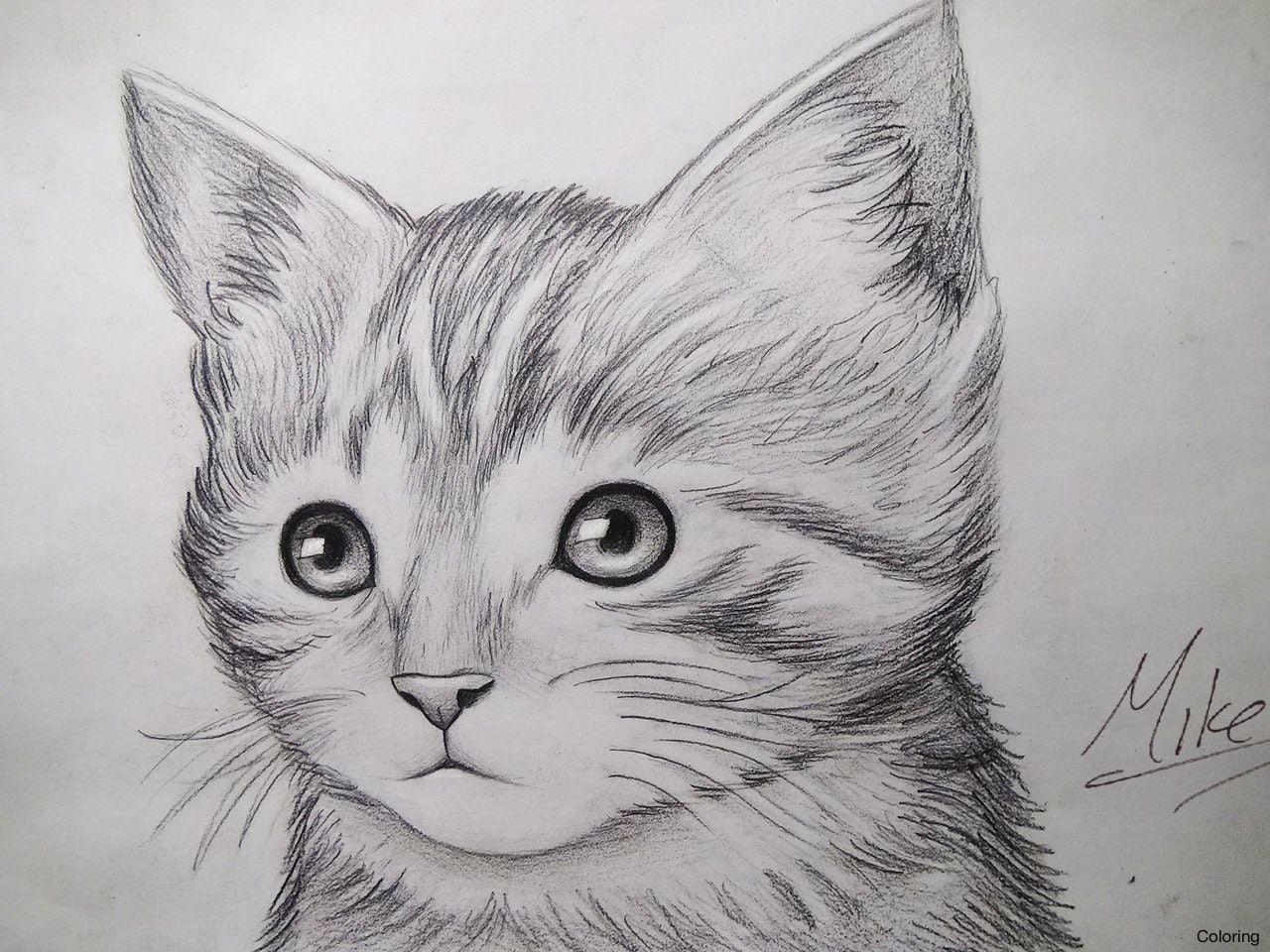 Pencil Drawings Of Kittens Drawing Artisan 1 Coloring 11f Coloring