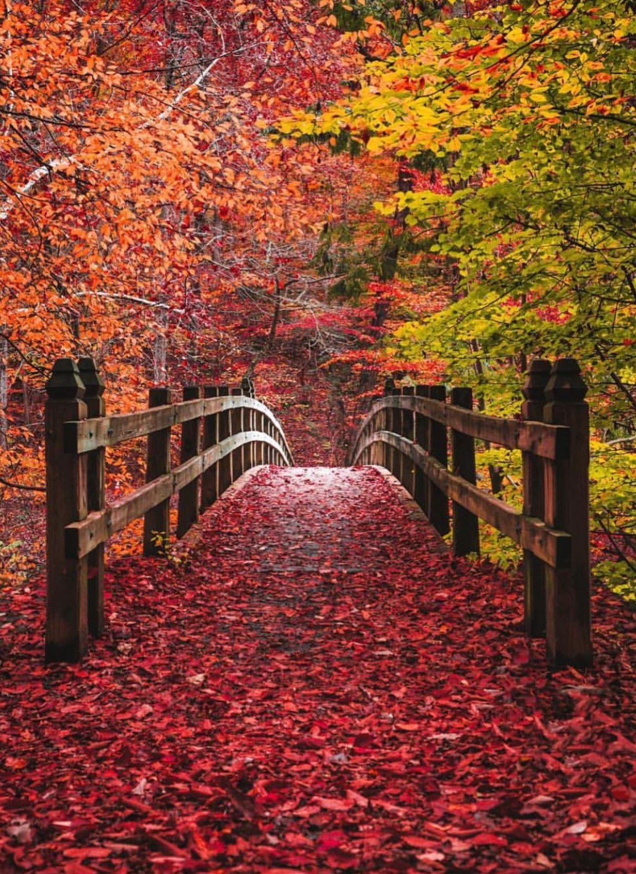Pin By Lena Mamidaki On Autumn Colours Fall Pictures Beautiful Nature Autumn Scenes