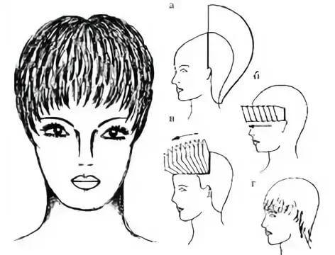 схемы стрижек для начинающих парикмахеров с описанием и ...