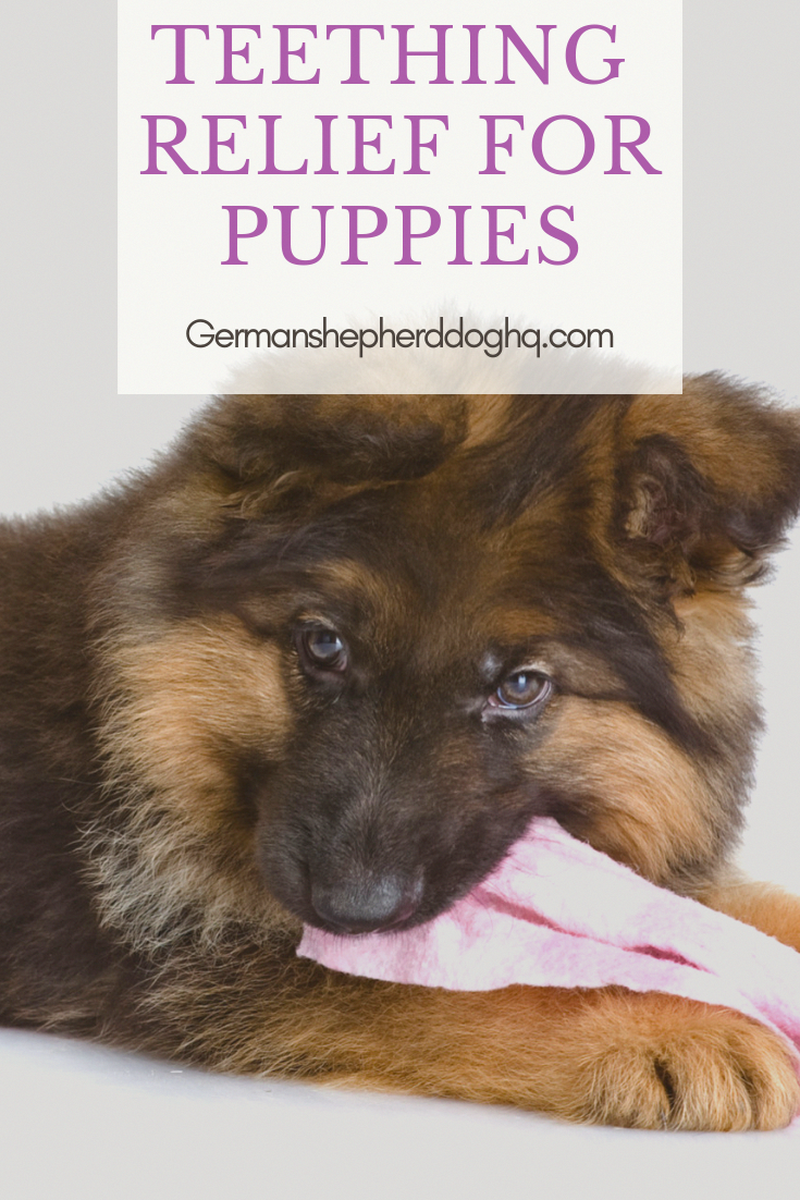 The Traits We All Enjoy About The Energetic German Shepherd Pup Germanshepherdgang Germanshepherdpuppy0 Ger Teething Relief Dog Teething Toys Puppy Teething