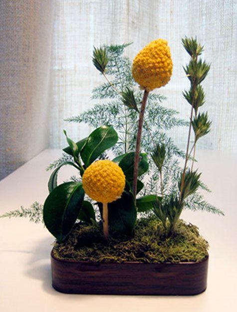 Miniature Tin Gardens