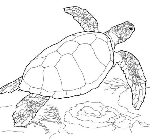 Sea Turtle Coloring Page Turtle Coloring Pages Sea Turtle Art Sea Turtle Drawing