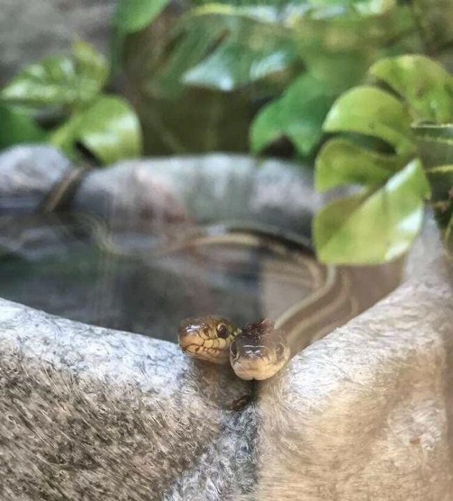 25 Fotos adoráveis cobras que farão você esquecer o medo que sente delas  1ac3bad3975