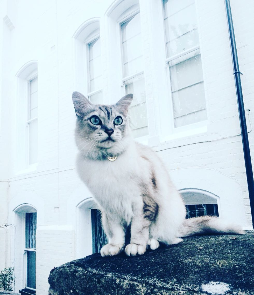 London cats never turn down a chance to model Cute cats