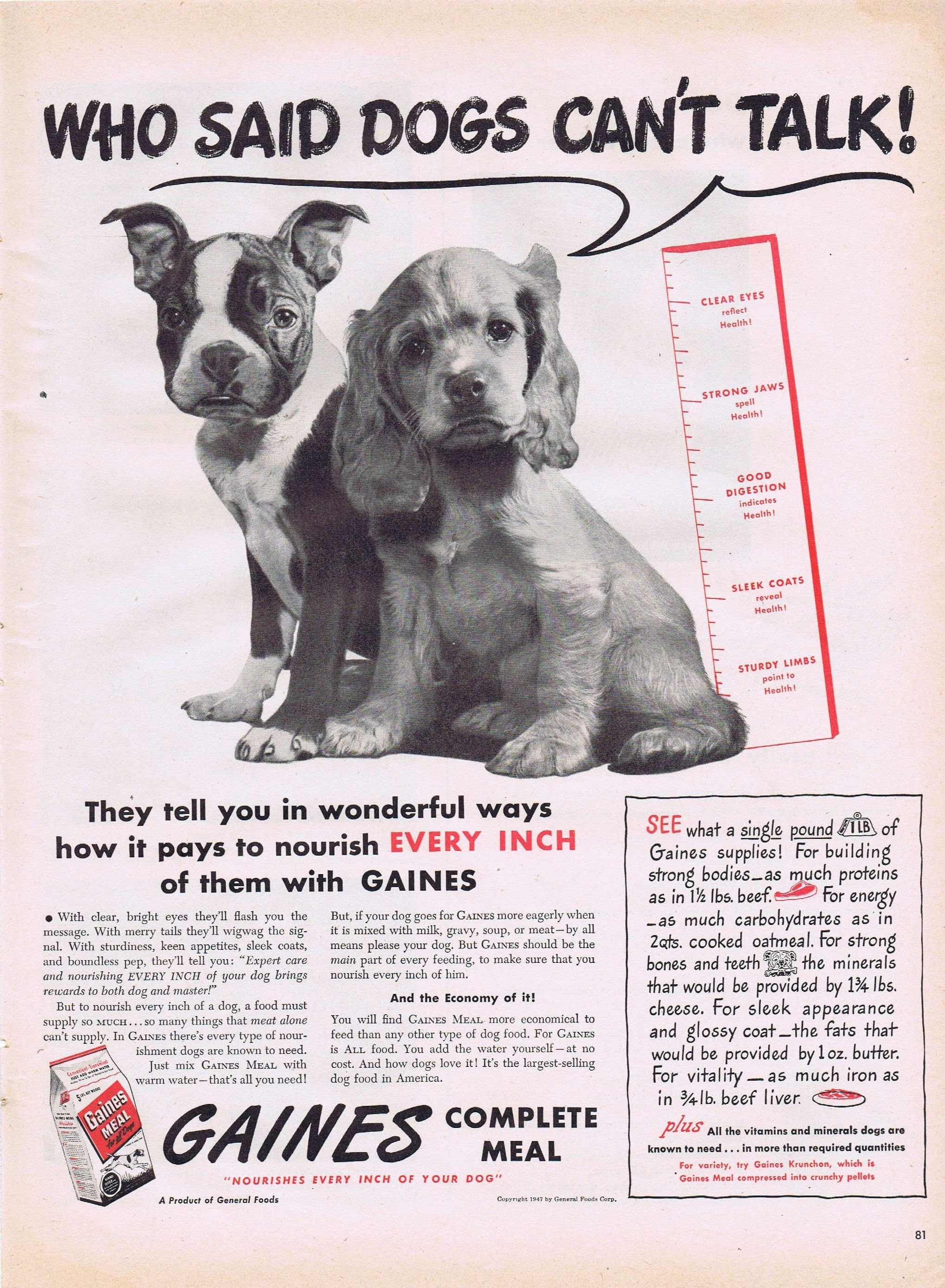 1947 Gaines Dog Food With Boston Terrier And Cocker Spaniel Original Vintage Advertisement Very Cute Boston Terrier Dogs Terrier