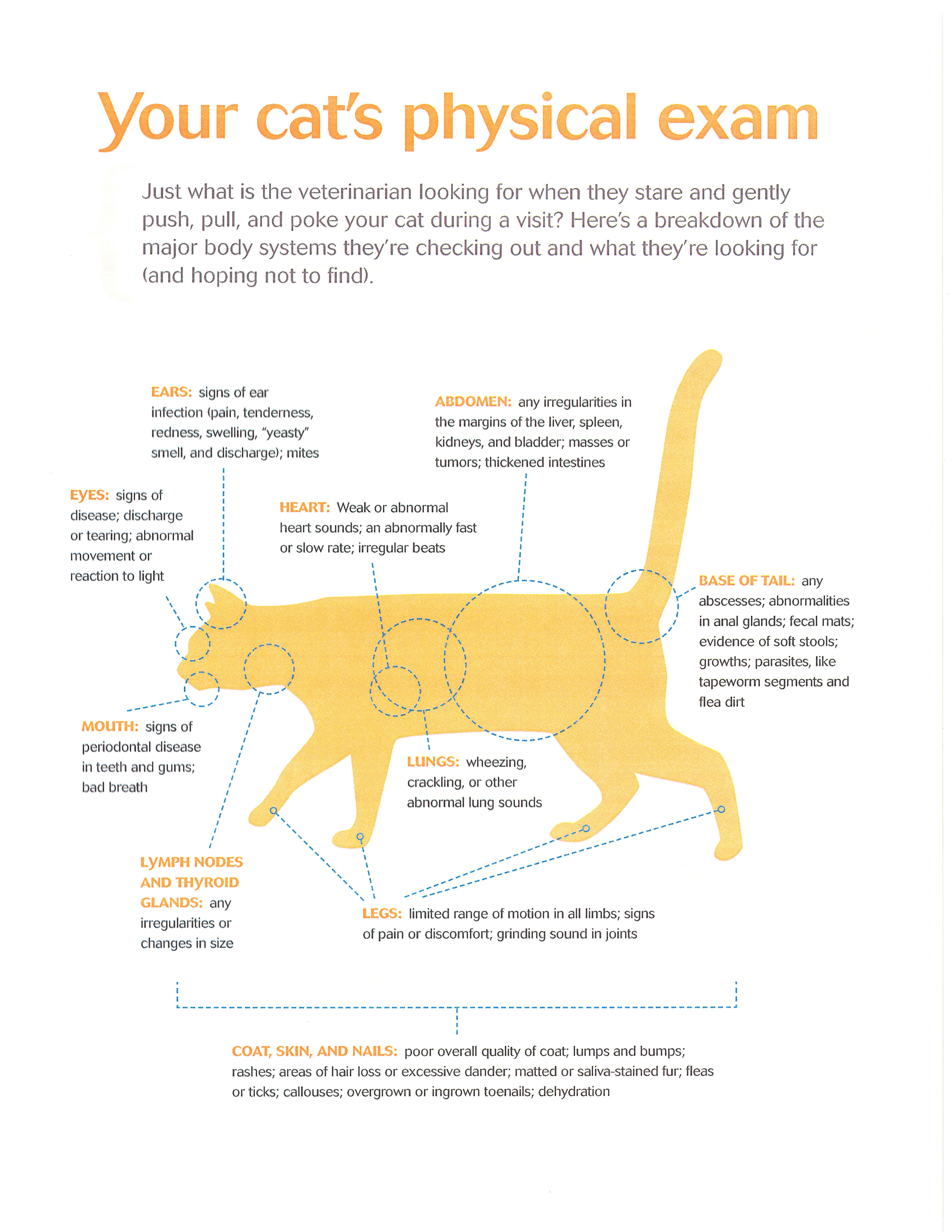Your cat's physical exam what your veterinarian is