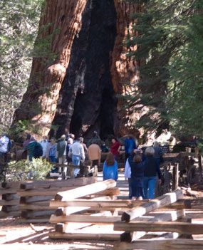 People stand around the Grizzly Giant, one of the largest sequoias in the Mariposa Grove