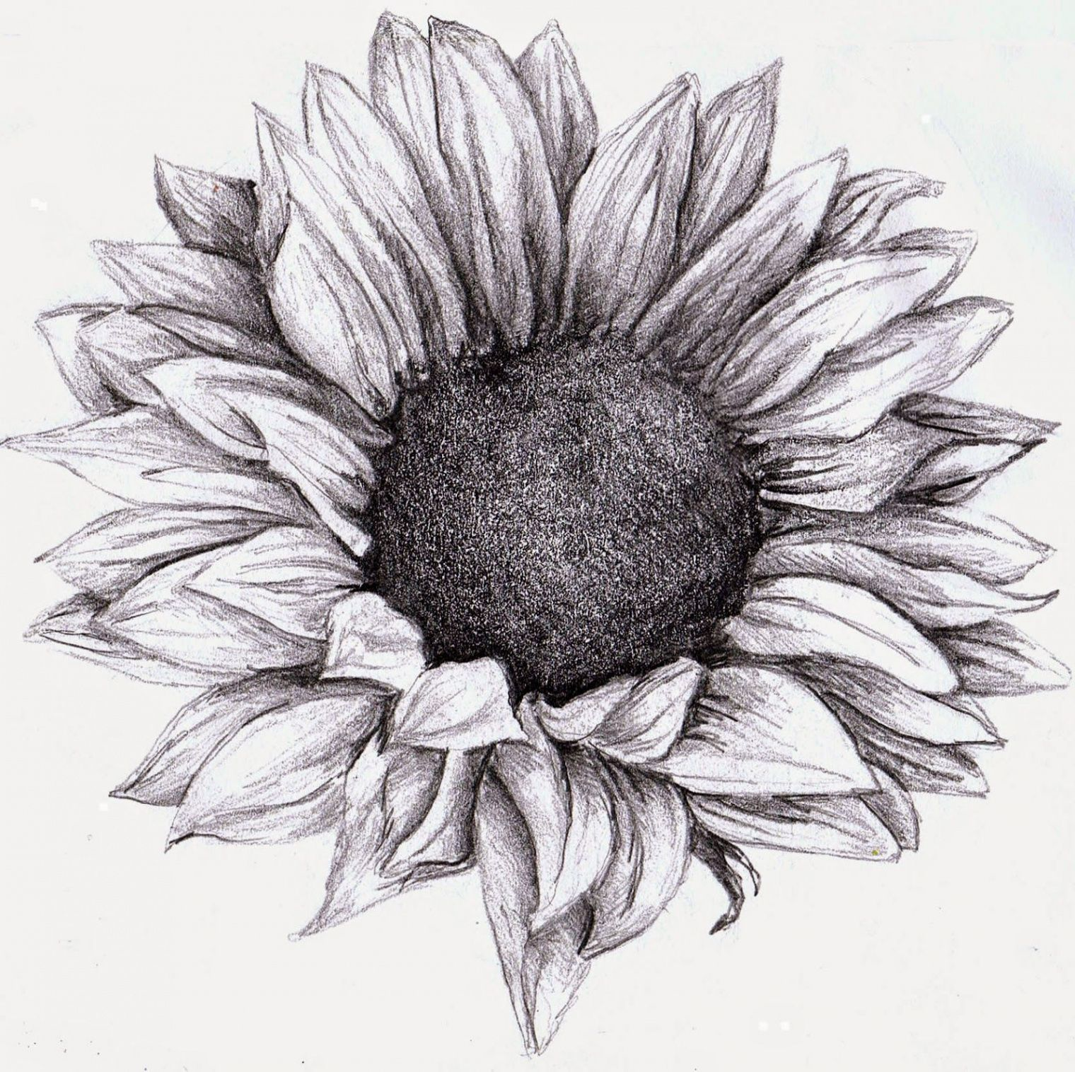 9 Great Lessons You Can Learn From Sunflower Tattoo Meaning Black And White Sunflower Tatt Sunflower Tattoo Shoulder Sunflower Tattoo Small Sunflower Drawing