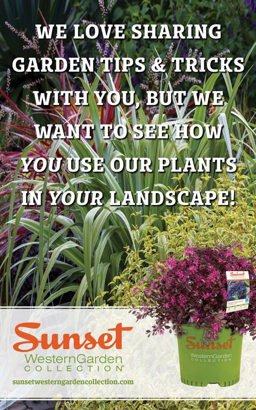 Want To Become A Sunset Western Garden Collection Pinterest Brand Ambador It S As Easy