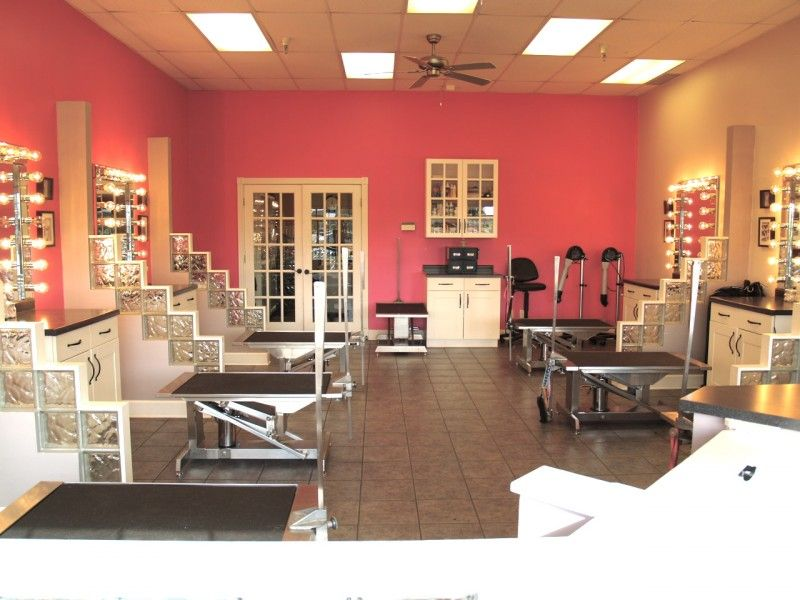 Pet Salon In Woodbury Mn Posh Pooch Pet Salon And Boutique Dog Grooming Salons Dog Grooming Shop Pet Salon