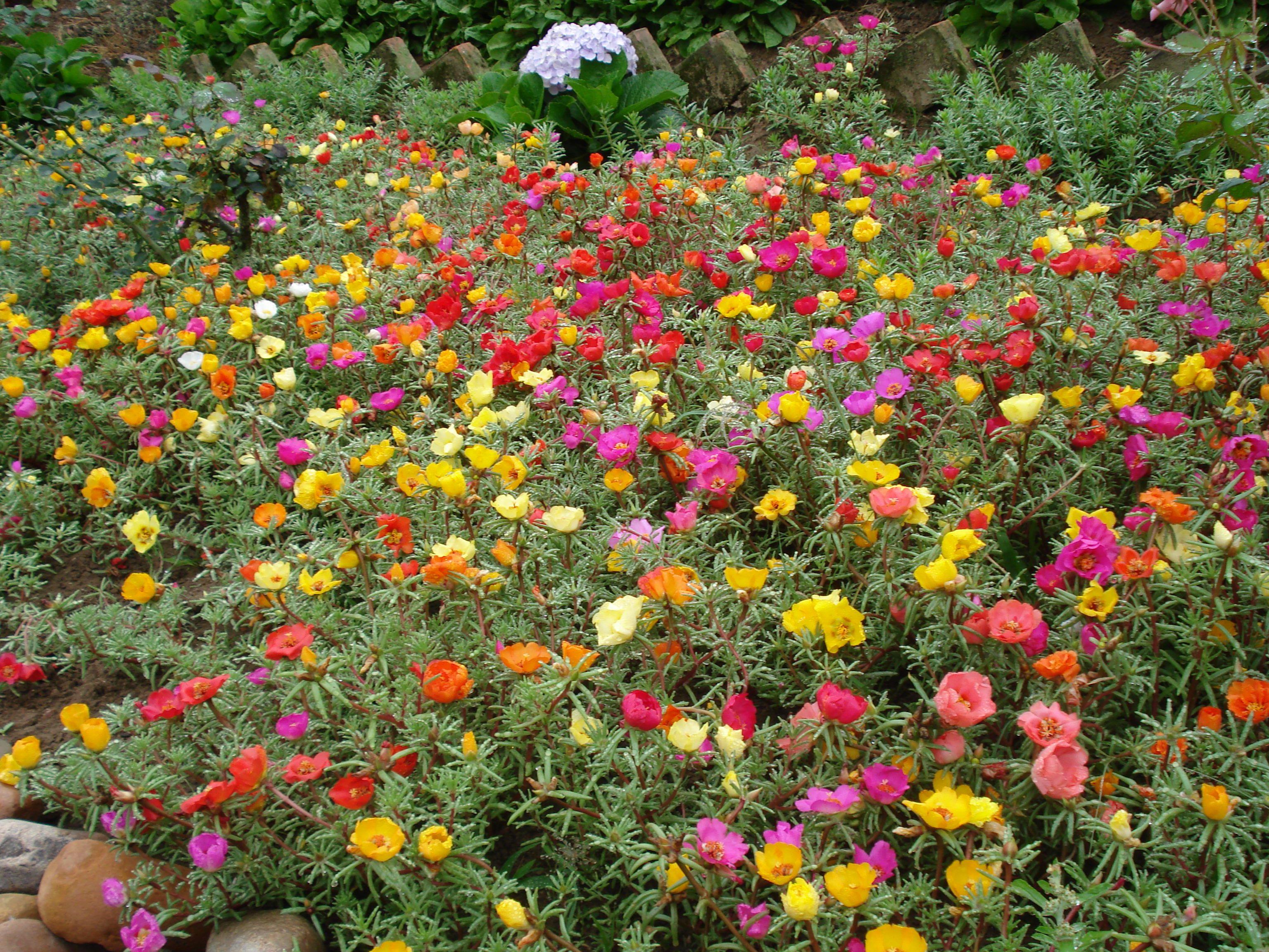 Tudo Em Flor Plantas Para Jardim Que Gostam De Sol Onze